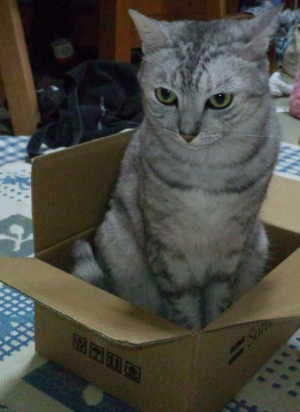 はな 箱に嵌る